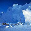Arctic_(Miniatire)