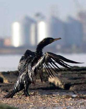 Bird_Oil_x330