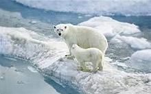 White_Bears_Ice_x220