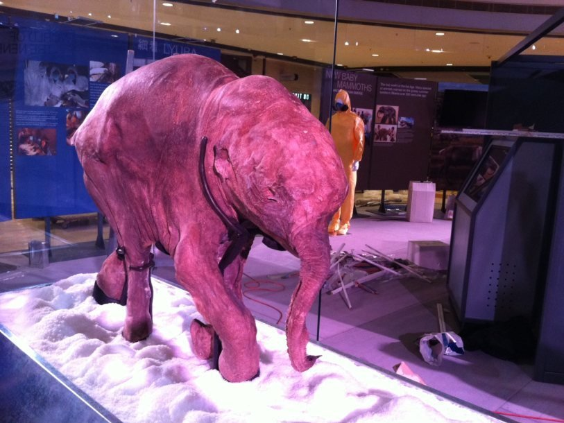 ps_lyuba_mammoth_1400585706